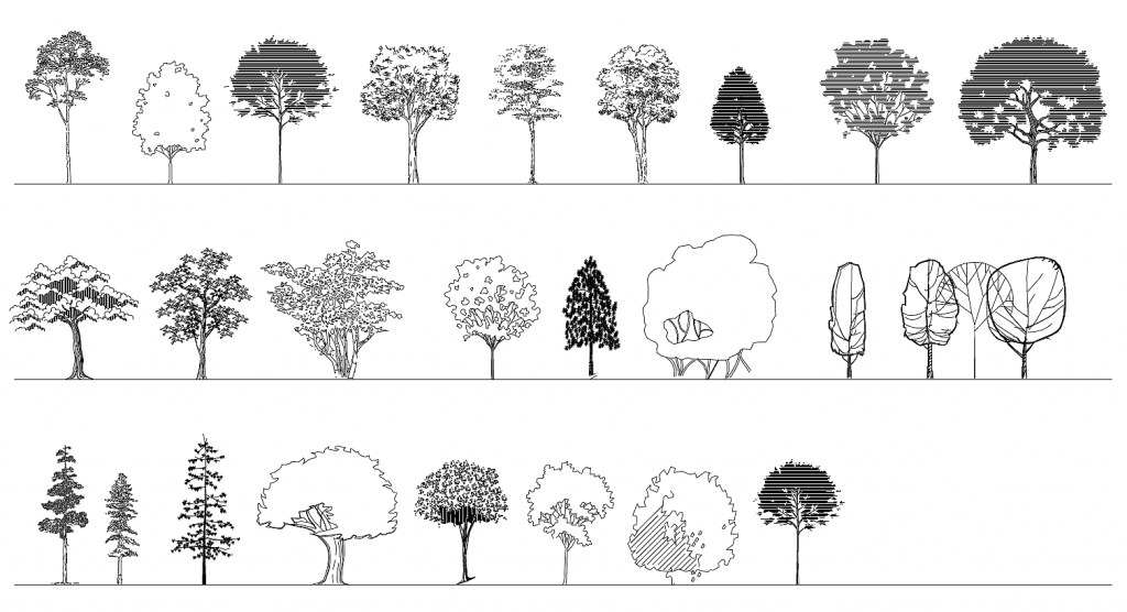 Deciduous Trees Elevation