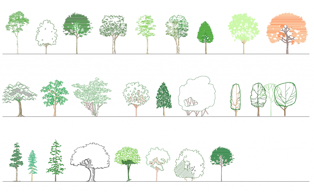 Deciduous trees in elevation - color