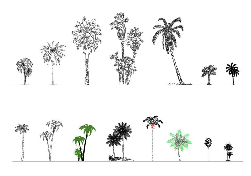 Palms in elevation view